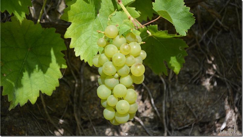 Promocionan vinos de Ribera del Duero y Rueda en China